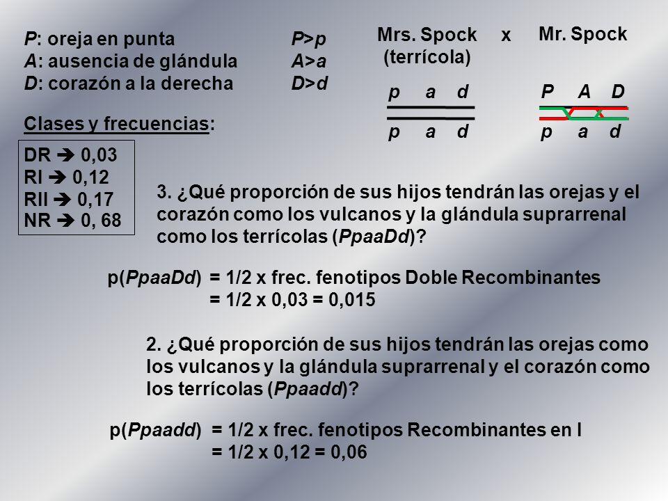 P: oreja en puntaP>p A: ausencia de glándulaA>a D: corazón a la derechaD>d Mr. Spock Mrs. Spock (terrícola) x p a d P A D p a d Clases y frecuencias: