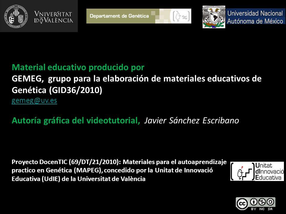 Material educativo producido por GEMEG, grupo para la elaboración de materiales educativos de Genética (GID36/2010) gemeg@uv.es Autoría gráfica del vi