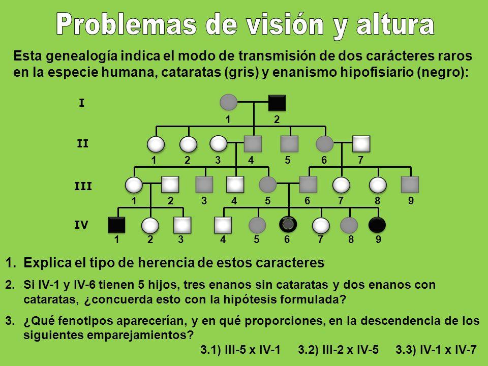 1 2 3 4 5 6 7 8 9 1 2 1 2 3 4 5 6 7 8 9 I II III 1 2 3 4 5 6 7 IV Esta genealogía indica el modo de transmisión de dos carácteres raros en la especie