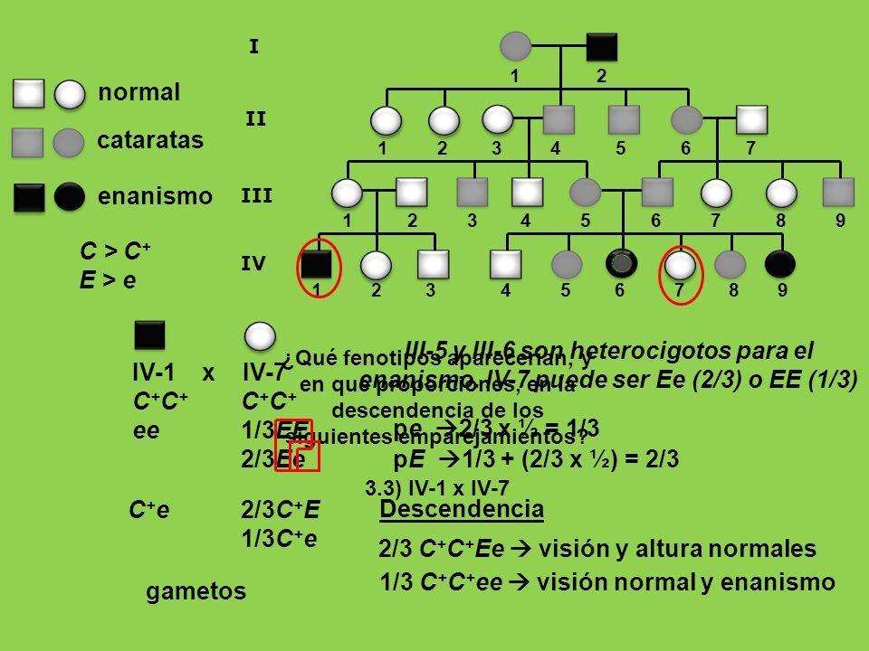 ¿Qué fenotipos aparecerían, y en qué proporciones, en la descendencia de los siguientes emparejamientos? 3.3) IV-1 x IV-7 C + ee 1 2 3 4 5 6 7 8 9 1 2