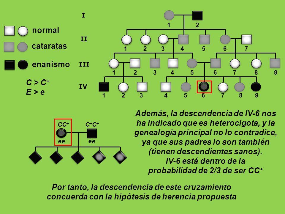 1 2 3 4 5 6 7 8 9 1 2 1 2 3 4 5 6 7 8 9 I II III 1 2 3 4 5 6 7 IV enanismo normal cataratas C > C + E > e ee ee CC + C + C + Además, la descendencia d