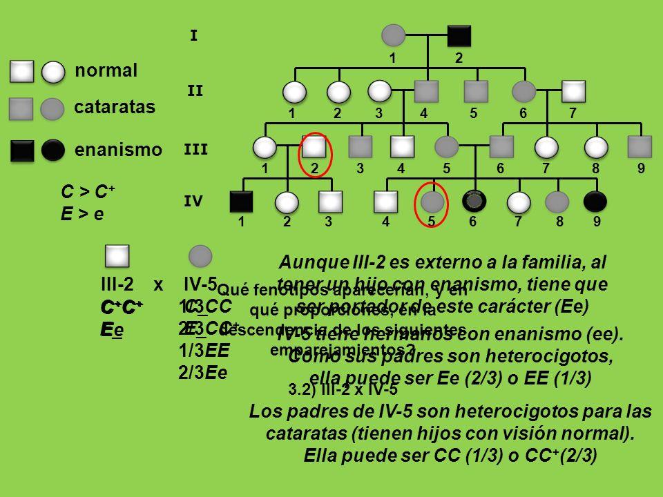 1 2 3 4 5 6 7 8 9 1 2 1 2 3 4 5 6 7 8 9 I II III 1 2 3 4 5 6 7 IV enanismo normal cataratas C > C + E > e III-2 x IV-5 C + E_ C_ E_ Aunque III-2 es ex