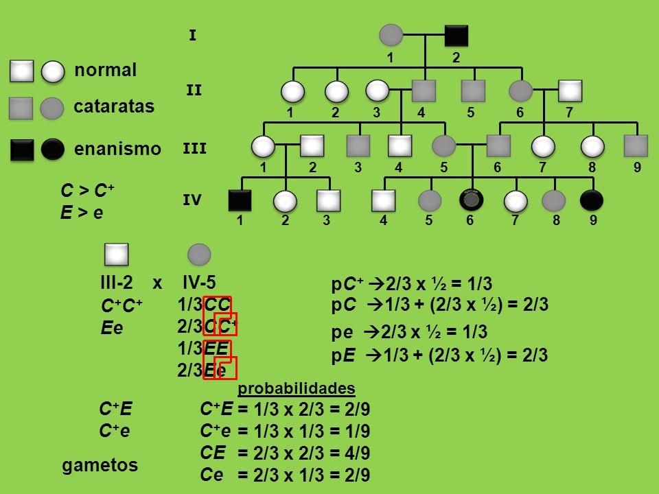 1/3CC 2/3CC + 1/3EE 2/3Ee C + Ee enanismo normal cataratas C > C + E > e 1 2 3 4 5 6 7 8 9 1 2 1 2 3 4 5 6 7 8 9 I II III 1 2 3 4 5 6 7 IV III-2 x IV-