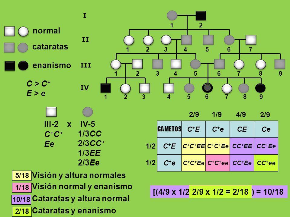 enanismo normal cataratas C > C + E > e 1 2 3 4 5 6 7 8 9 1 2 1 2 3 4 5 6 7 8 9 I II III 1 2 3 4 5 6 7 IV 1/3CC 2/3CC + 1/3EE 2/3Ee C + Ee III-2 x IV-