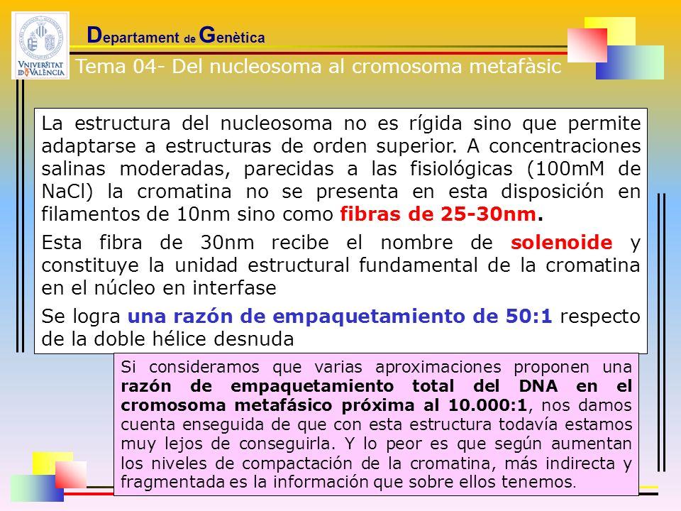 D epartament de G enètica La estructura del nucleosoma no es rígida sino que permite adaptarse a estructuras de orden superior. A concentraciones sali