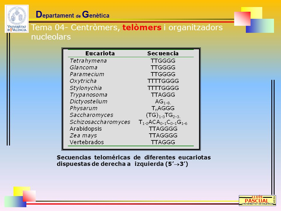 D epartament de G enètica LLUÍS PASCUAL UNIVERSITAT DE VALÈNCIA 20032003 Secuencias teloméricas de diferentes eucariotas dispuestas de derecha a izqui