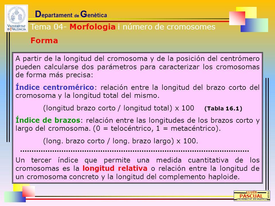 D epartament de G enètica LLUÍS PASCUAL UNIVERSITAT DE VALÈNCIA 20032003 A partir de la longitud del cromosoma y de la posición del centrómero pueden