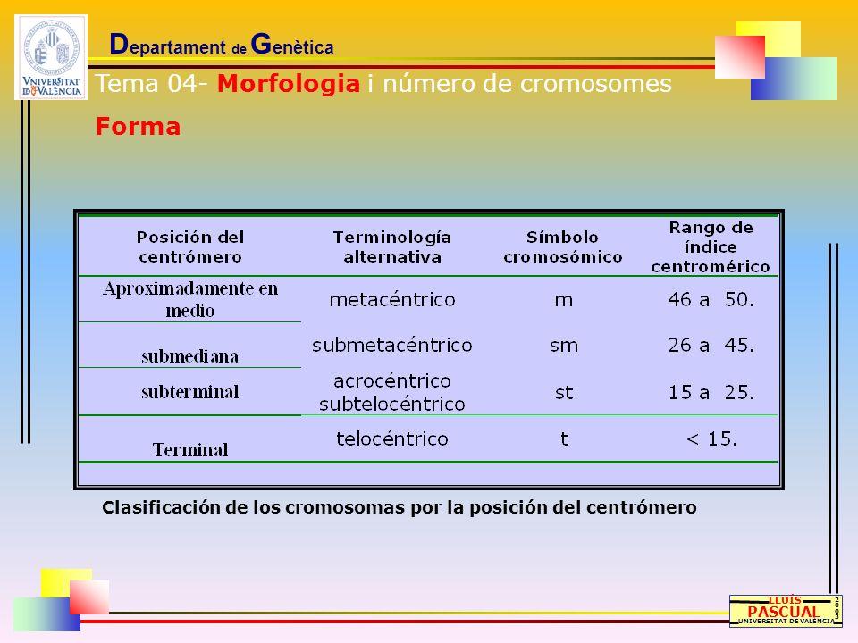 D epartament de G enètica LLUÍS PASCUAL UNIVERSITAT DE VALÈNCIA 20032003 Clasificación de los cromosomas por la posición del centrómero Tema 04- Morfo