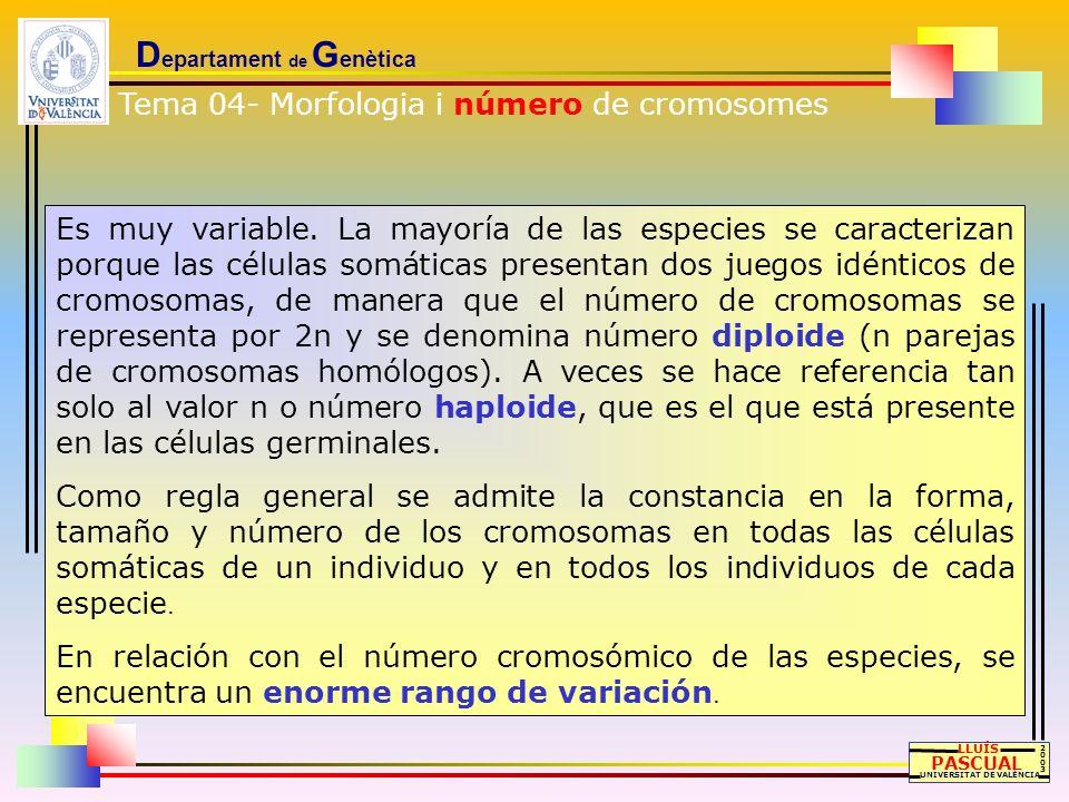 D epartament de G enètica LLUÍS PASCUAL UNIVERSITAT DE VALÈNCIA 20032003 Es muy variable. La mayoría de las especies se caracterizan porque las célula