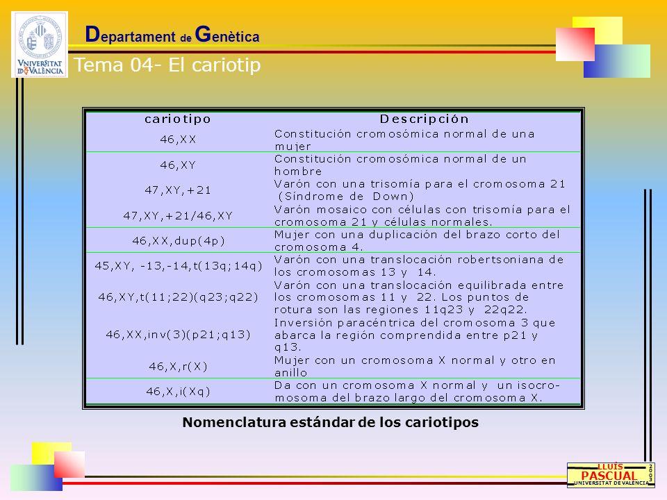 D epartament de G enètica LLUÍS PASCUAL UNIVERSITAT DE VALÈNCIA 20032003 Nomenclatura estándar de los cariotipos Tema 04- El cariotip