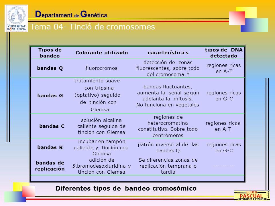 D epartament de G enètica LLUÍS PASCUAL UNIVERSITAT DE VALÈNCIA 20032003 Tipos de bandeo Colorante utilizado características tipos de DNA detectado ba