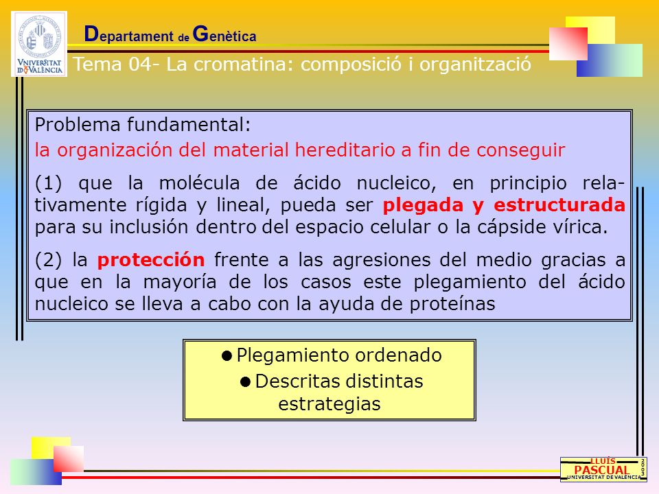 D epartament de G enètica LLUÍS PASCUAL UNIVERSITAT DE VALÈNCIA 20032003 Problema fundamental: la organización del material hereditario a fin de conse