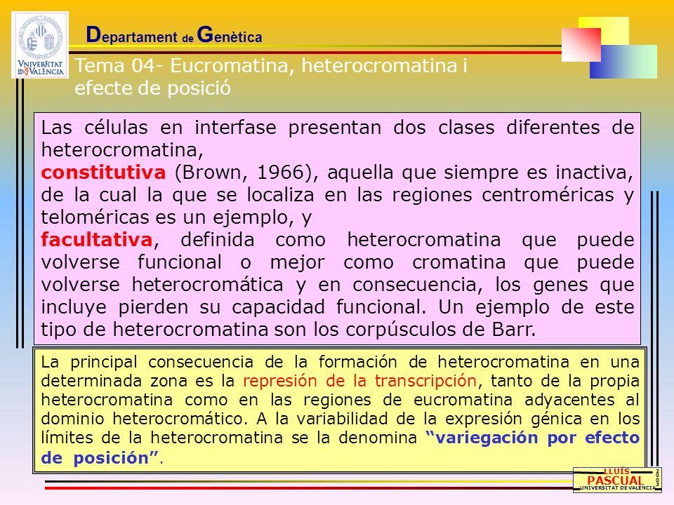 D epartament de G enètica Las células en interfase presentan dos clases diferentes de heterocromatina, constitutiva (Brown, 1966), aquella que siempre