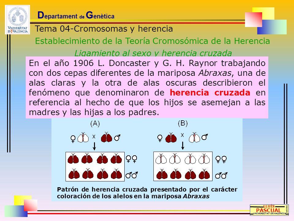 D epartament de G enètica Tema 04-Cromosomas y herencia Establecimiento de la Teoría Cromosómica de la Herencia Ligamiento al sexo y herencia cruzada