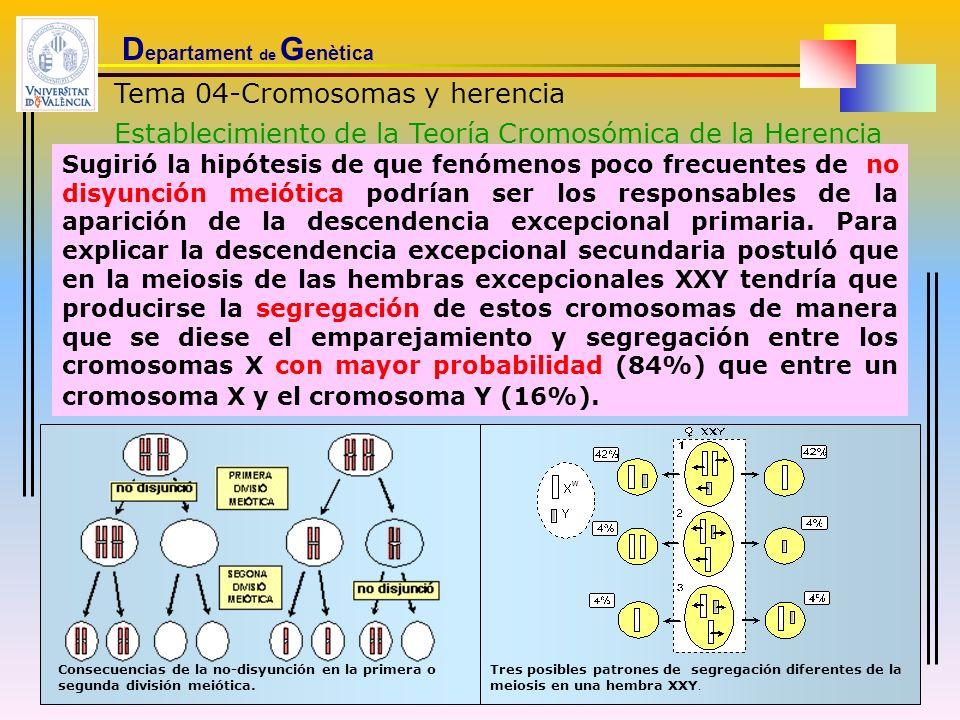 D epartament de G enètica Tema 04-Cromosomas y herencia Establecimiento de la Teoría Cromosómica de la Herencia Sugirió la hipótesis de que fenómenos