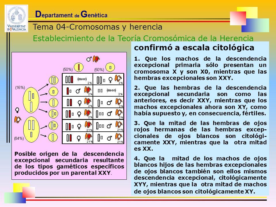 D epartament de G enètica Tema 04-Cromosomas y herencia Establecimiento de la Teoría Cromosómica de la Herencia Posible origen de la descendencia exce
