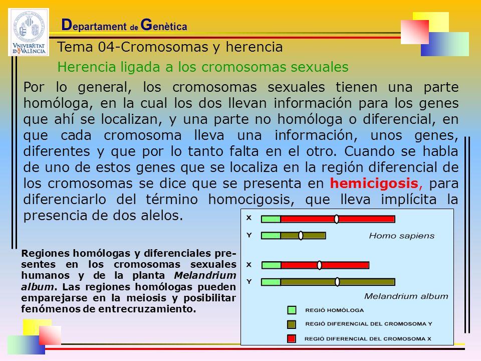 D epartament de G enètica Tema 04-Cromosomas y herencia Herencia ligada a los cromosomas sexuales Por lo general, los cromosomas sexuales tienen una p
