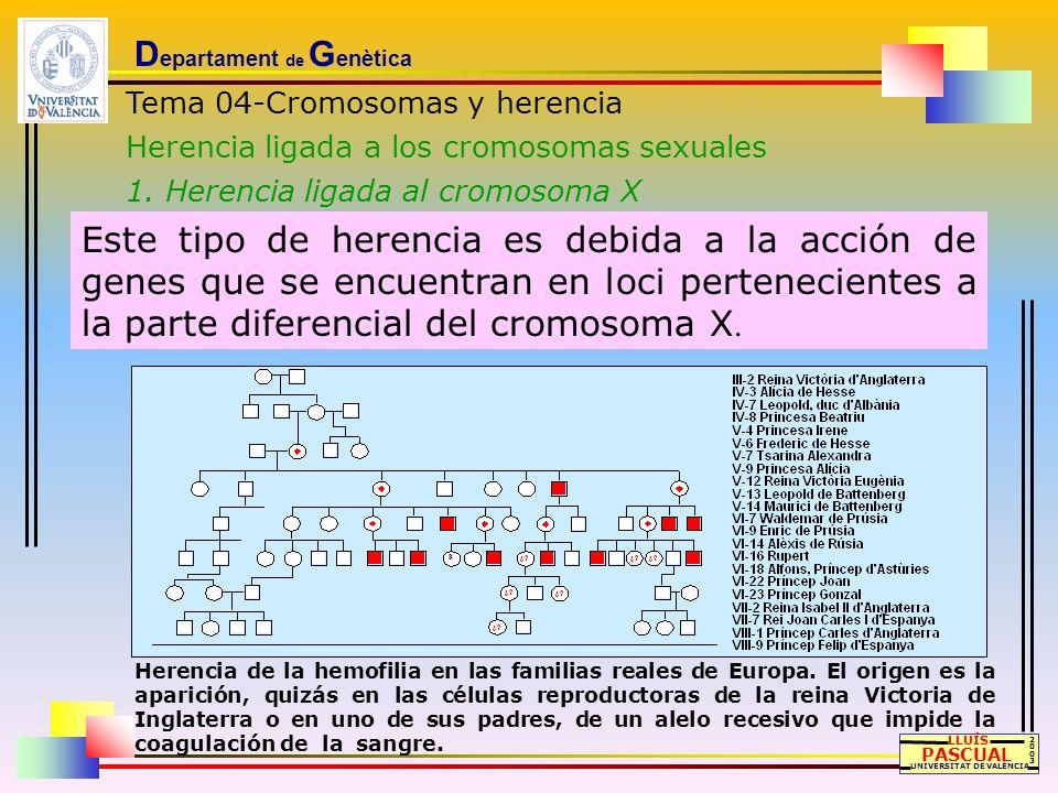D epartament de G enètica Tema 04-Cromosomas y herencia Herencia ligada a los cromosomas sexuales 1. Herencia ligada al cromosoma X LLUÍS PASCUAL UNIV
