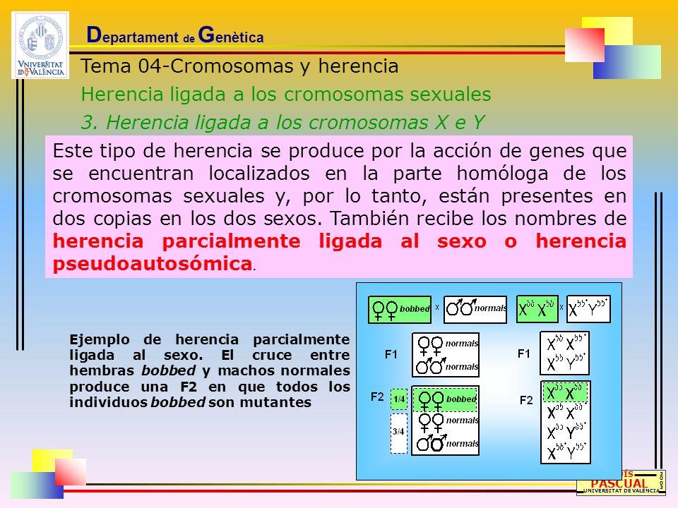 D epartament de G enètica Tema 04-Cromosomas y herencia Herencia ligada a los cromosomas sexuales 3. Herencia ligada a los cromosomas X e Y LLUÍS PASC