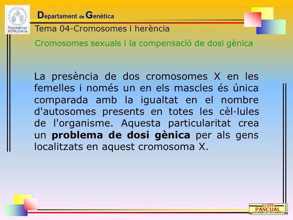 D epartament de G enètica LLUÍS PASCUAL UNIVERSITAT DE VALÈNCIA 20032003 Tema 04-Cromosomes i herència Cromosomes sexuals i la compensació de dosi gèn