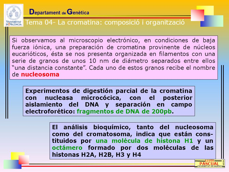 D epartament de G enètica LLUÍS PASCUAL UNIVERSITAT DE VALÈNCIA 20032003 Tipos de bandeo Colorante utilizado características tipos de DNA detectado bandas Q fluorocromos detección de zonas fluorescentes, sobre todo del cromosoma Y regiones ricas en A-T bandas G tratamiento suave con tripsina (optativo) seguido de tinción con Giemsa bandas fluctuantes, aumenta la señal según adelanta la mitosis.