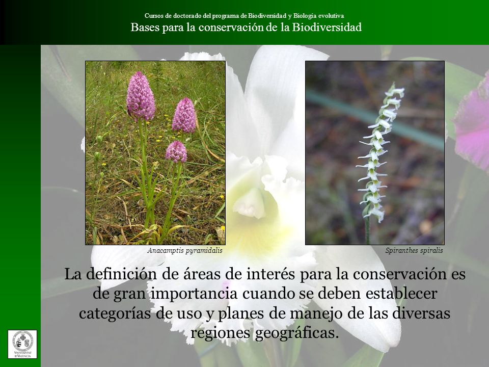 Cursos de doctorado del programa de Biodiversidad y Biología evolutiva Bases para la conservación de la BiodiversidadResultados El total se ha obtenido aplicando la siguiente fórmula: T = 3 / 2 (UICN) + 3 / 2 (Preservación) + 3 / 2 (Presencias) + 1 / 2 (Filogenia) + 1 / 2 (Pisos) + 1 / 2 (Europa)