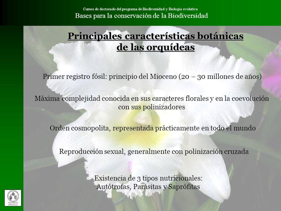 Cursos de doctorado del programa de Biodiversidad y Biología evolutiva Bases para la conservación de la Biodiversidad Características de las orquídeas valencianas importantes para su conservación Absoluta dependencia de la micorrización en ambientes naturales.