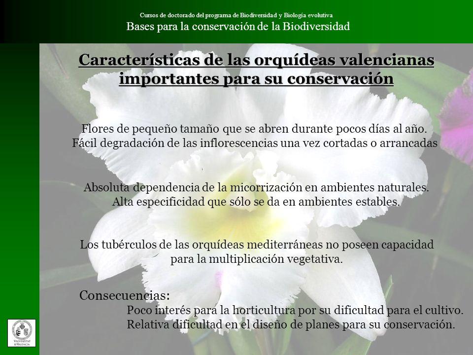 Cursos de doctorado del programa de Biodiversidad y Biología evolutiva Bases para la conservación de la BiodiversidadDiscusión Coincidencia de áreas prioritarias elegidas para la conservación de orquídeas silvestres en la Comunidad Valenciana con los L.I.C.´s.