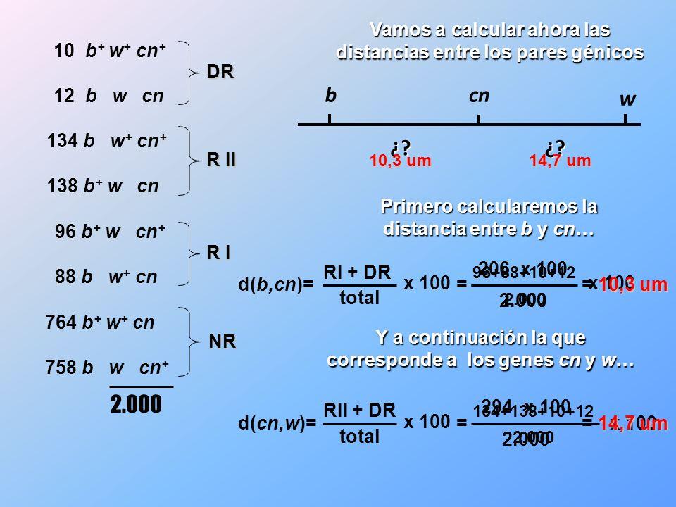 DR R II R I NR 2.000 b cn w ¿?¿? Primero calcularemos la distancia entre b y cn… d(b,cn)= RI + DR total x 100 96+88+10+12 2.000 x 100 = 206 2.000 x 10