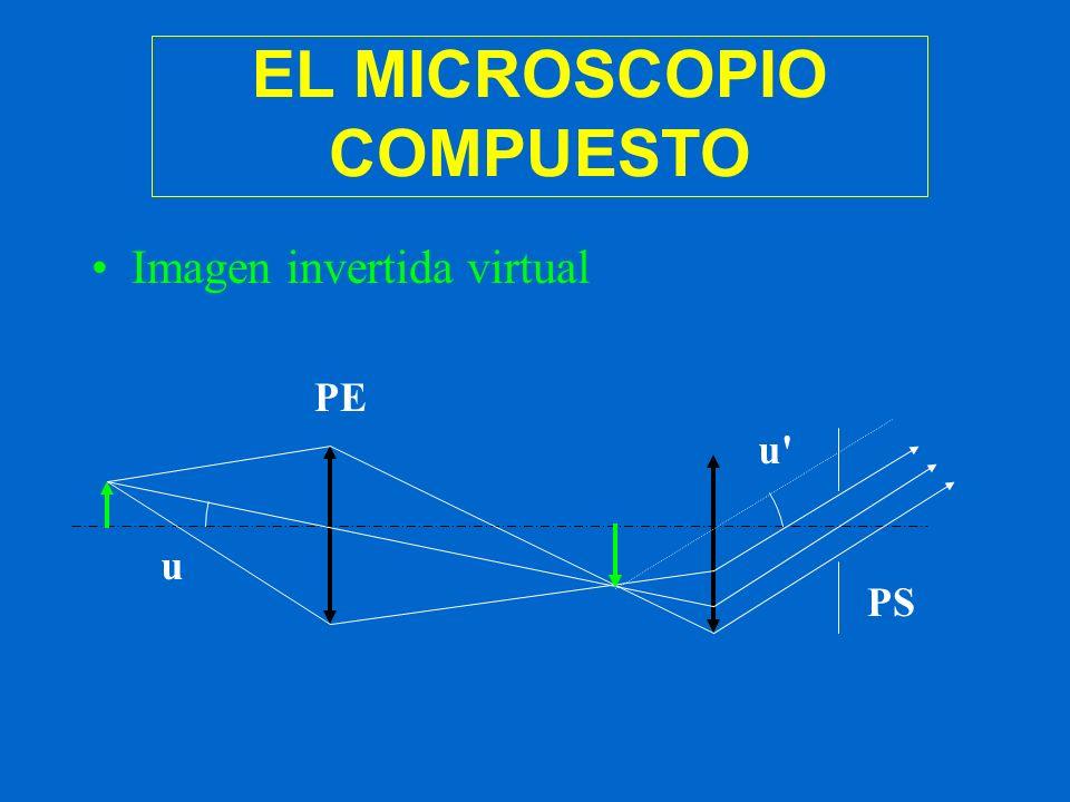 EL MICROSCOPIO COMPUESTO Imagen invertida virtual PE PS u u'