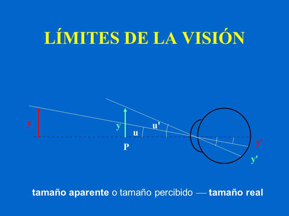 LÍMITES DE LA VISIÓN y y u u' y' P tamaño aparente o tamaño percibido tamaño real