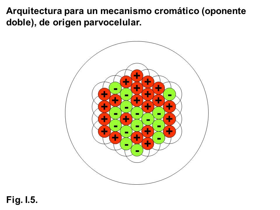 Arquitectura para un mecanismo cromático (oponente doble), de origen parvocelular. - + + + - + + + - - + + + - + - - - + - - + - + + + + - + + - - - +