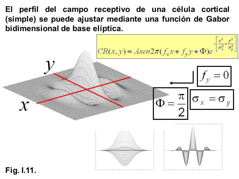 El perfil del campo receptivo de una célula cortical (simple) se puede ajustar mediante una función de Gabor bidimensional de base elíptica. Fig. I.11