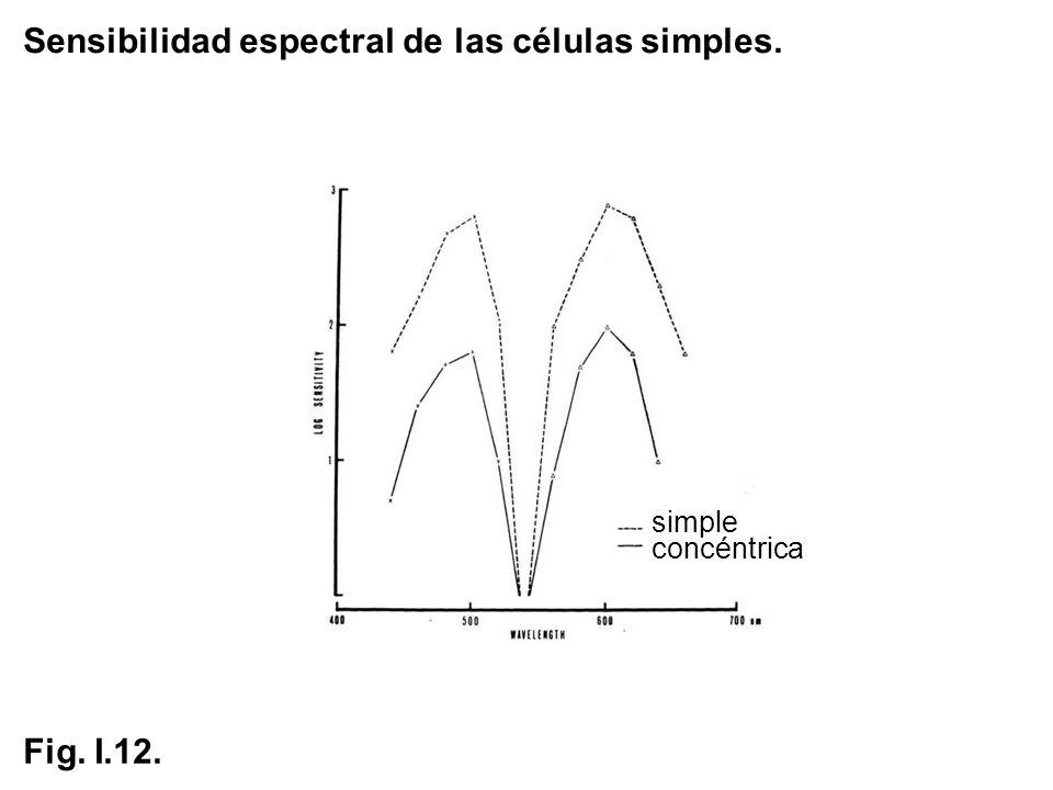 Sensibilidad espectral de las células simples. simple concéntrica Fig. I.12.