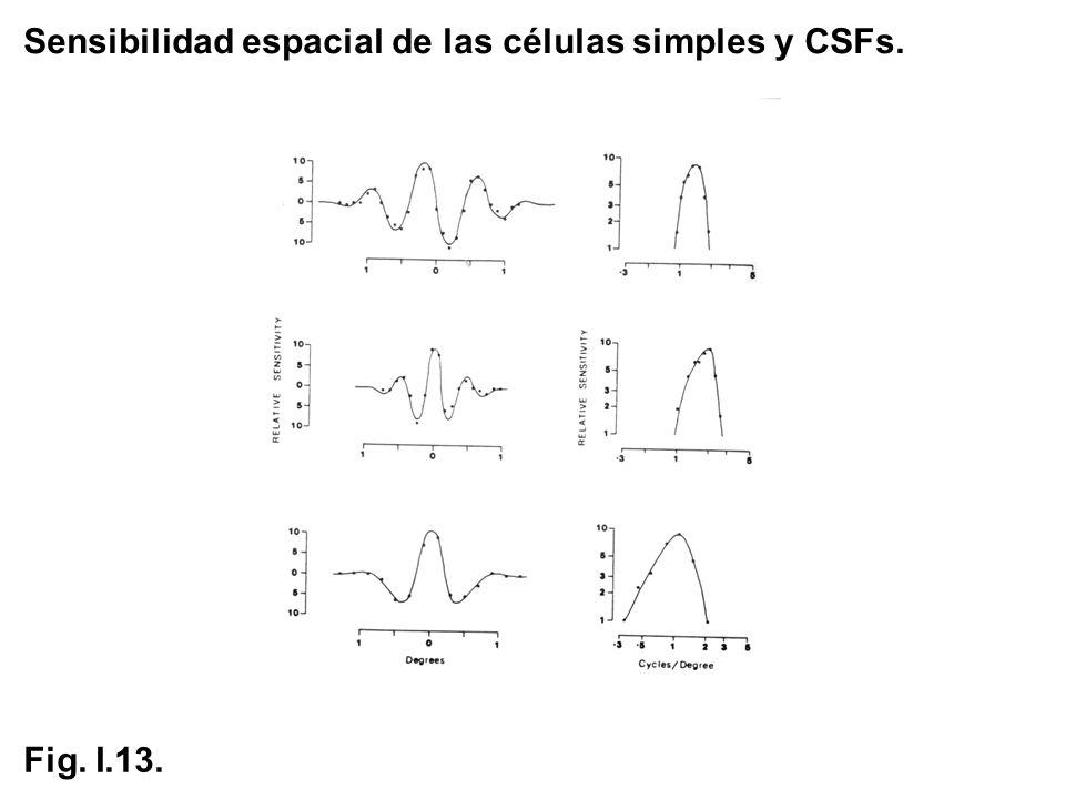 Sensibilidad espacial de las células simples y CSFs. Fig. I.13.