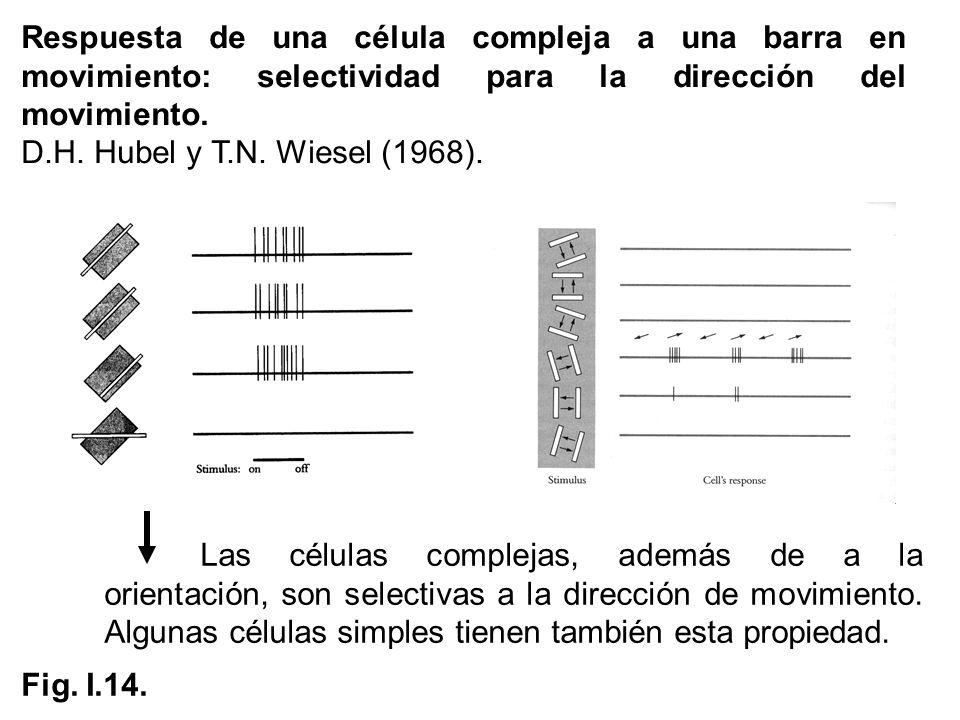 Respuesta de una célula compleja a una barra en movimiento: selectividad para la dirección del movimiento. D.H. Hubel y T.N. Wiesel (1968). Fig. I.14.