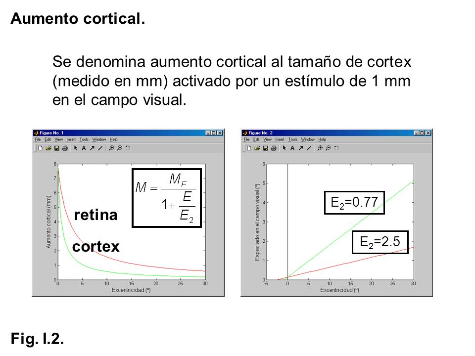 Aumento cortical. Se denomina aumento cortical al tamaño de cortex (medido en mm) activado por un estímulo de 1 mm en el campo visual. retina cortex E