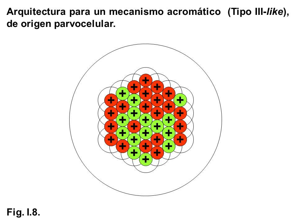 + + + + + + + + + + + + + + + + + + + + + + + + + + + + + + + + + + + + + Arquitectura para un mecanismo acromático (Tipo III-like), de origen parvoce