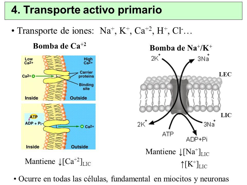 4. Transporte activo primario Bomba de Ca +2 Bomba de Na + /K + Mantiene [Ca +2 ] LIC Mantiene [Na + ] LIC [K + ] LIC LEC LIC Transporte de iones: Na