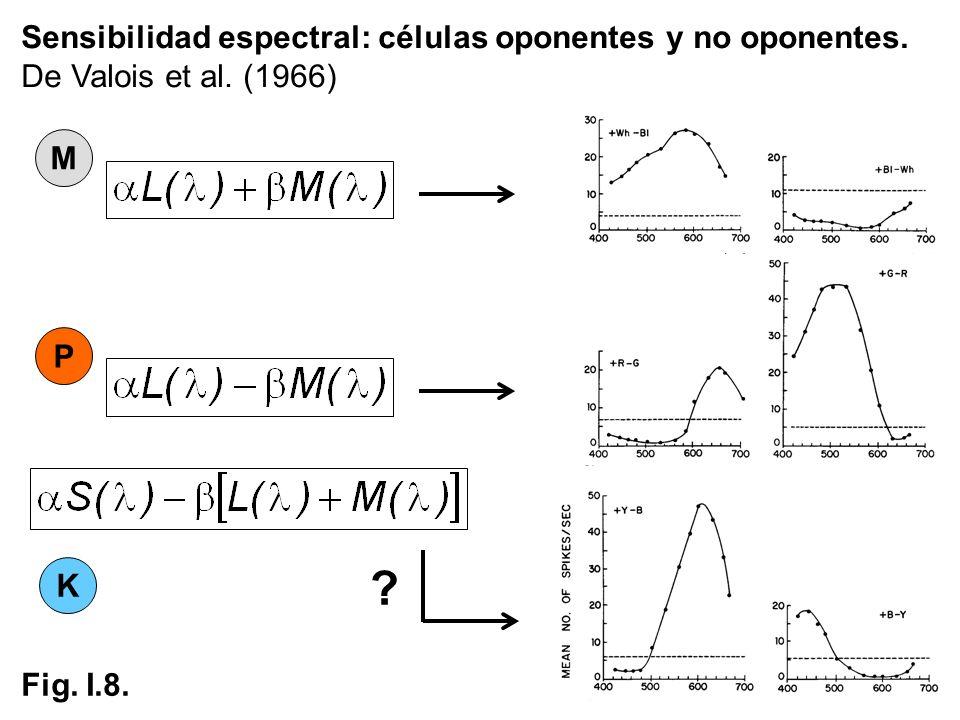 P M K Sensibilidad espectral: células oponentes y no oponentes. De Valois et al. (1966) ? Fig. I.8.