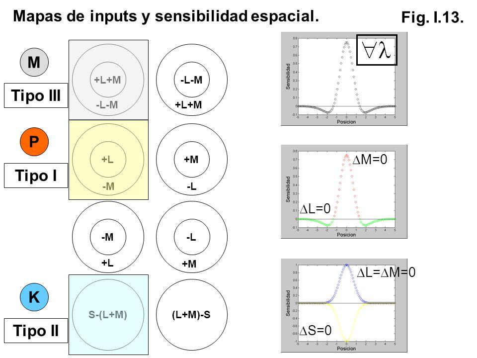 S-(L+M)(L+M)-S K +L+M -L-M +L+M M P +L -M +M -L -M +L -L +M Mapas de inputs y sensibilidad espacial. Tipo III Tipo I Tipo II Fig. I.13. M=0 L=0 L= M=0