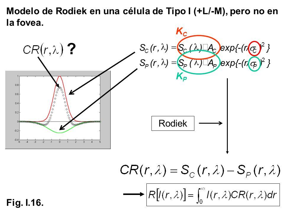 Modelo de Rodiek en una célula de Tipo I (+L/-M), pero no en la fovea. Rodiek S}) {-(r/ expA)(S),(r CCCC 2 S}) {-(r/ expA)(S),(r PPPP 2 ? KCKC KPKP Fi