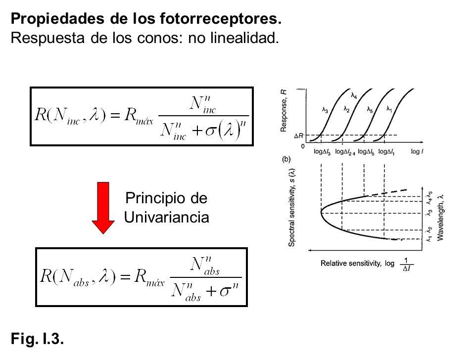 Propiedades de los fotorreceptores. Respuesta de los conos: no linealidad. Fig. I.3. Principio de Univariancia