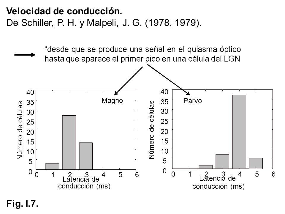 Velocidad de conducción. De Schiller, P. H. y Malpeli, J. G. (1978, 1979). 0 5 10 15 20 25 30 35 40 Número de células 0123456 Latencia de conducción (