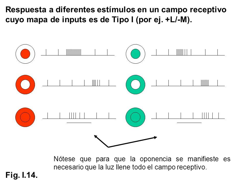 Respuesta a diferentes estímulos en un campo receptivo cuyo mapa de inputs es de Tipo I (por ej. +L/-M). Nótese que para que la oponencia se manifiest