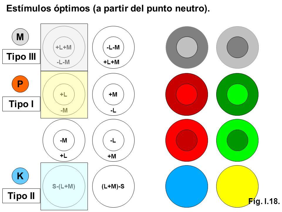 S-(L+M)(L+M)-S K +L+M -L-M +L+M M P +L -M +M -L -M +L -L +M Tipo III Tipo I Tipo II Estímulos óptimos (a partir del punto neutro). Fig. I.18.