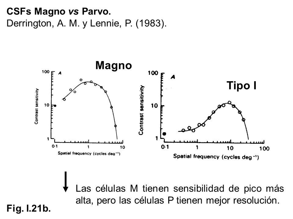 CSFs Magno vs Parvo. Derrington, A. M. y Lennie, P. (1983). Fig. I.21b. Tipo I Magno Las células M tienen sensibilidad de pico más alta, pero las célu