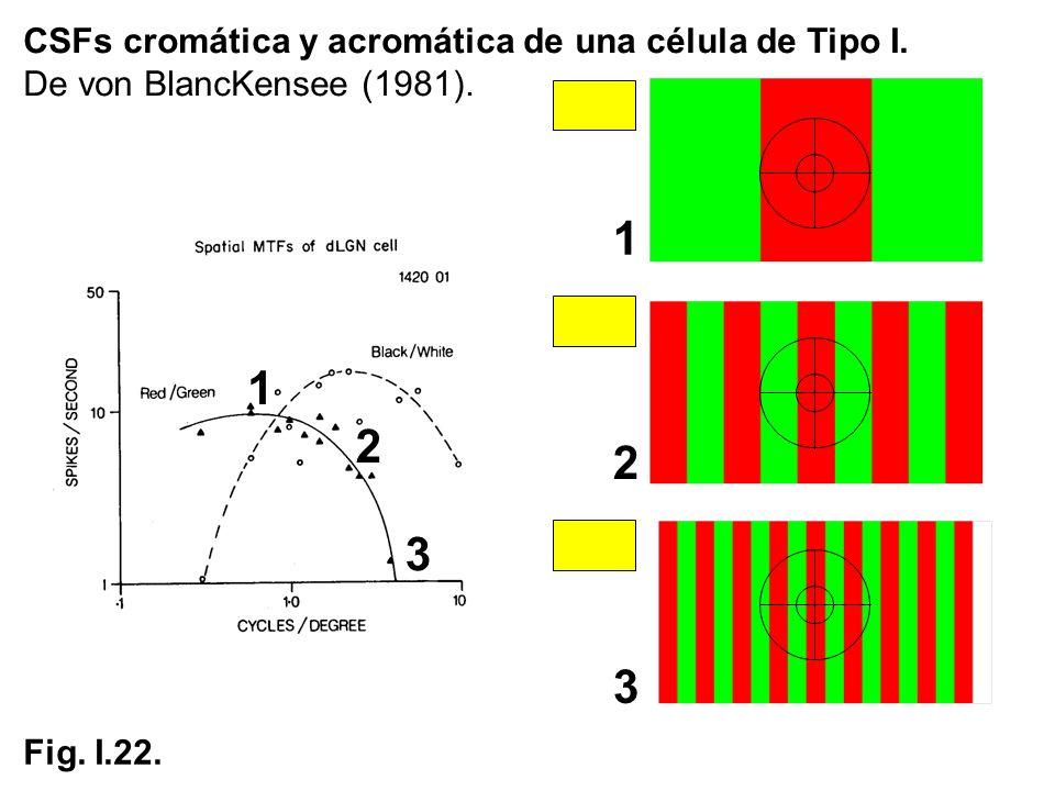 CSFs cromática y acromática de una célula de Tipo I. De von BlancKensee (1981). Fig. I.22. 1 2 3 1 2 3
