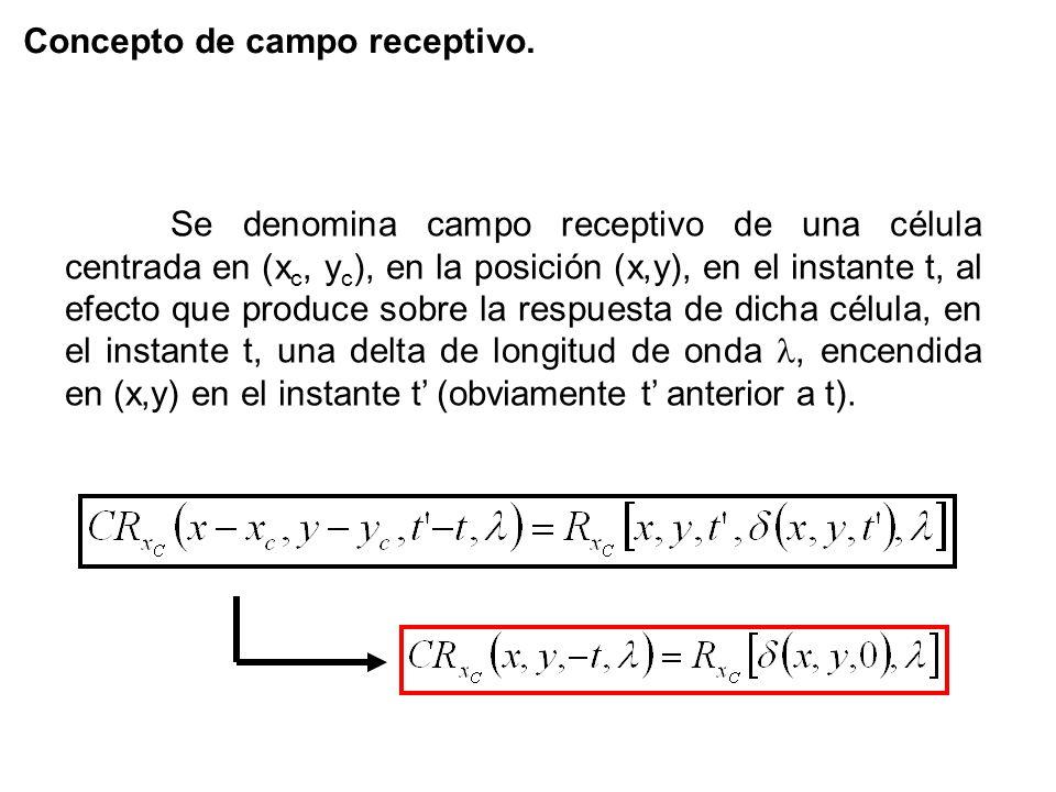 Concepto de campo receptivo. Se denomina campo receptivo de una célula centrada en (x c, y c ), en la posición (x,y), en el instante t, al efecto que