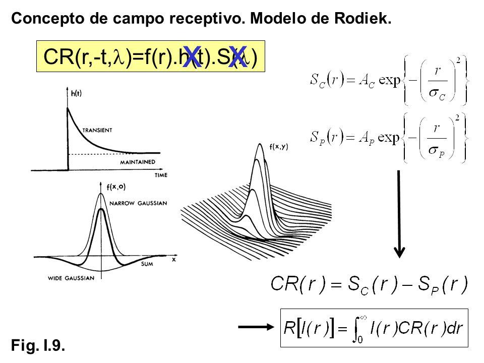 Concepto de campo receptivo. Modelo de Rodiek. Fig. I.9. CR(r,-t, )=f(r).h(t).S( ) xx
